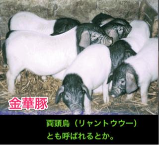image-20120524193315.png
