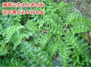 image-20120704112621.png